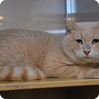 Adopt A Pet :: Stewart - Conyers, GA
