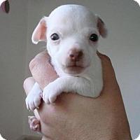 Adopt A Pet :: Jagger - Cleveland, OH