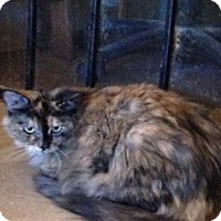 Adopt A Pet :: Madeline - Tucson, AZ