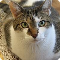 Adopt A Pet :: Flick - Naperville, IL