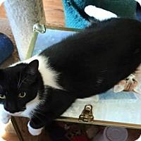 Adopt A Pet :: Miss Kitty - Strongsville, OH