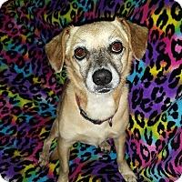 Adopt A Pet :: Penny Lou - Marietta, GA