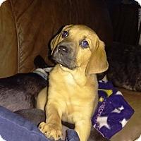 Adopt A Pet :: Carina - Charlestown, RI