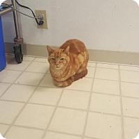 Adopt A Pet :: Max - Richardson, TX
