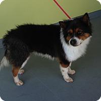 Adopt A Pet :: MELLO - San Pedro, CA