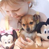 Adopt A Pet :: Jill - Loomis, CA