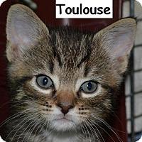 Adopt A Pet :: Toulouse - Herndon, VA
