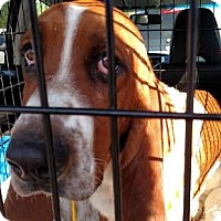 Adopt A Pet :: Jackson - Charleston, SC