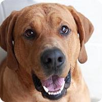 Adopt A Pet :: BEAUX - Kyle, TX
