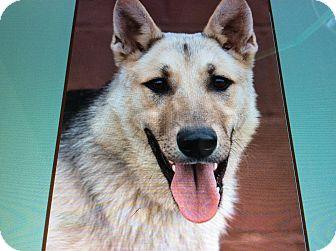 German Shepherd Dog Puppy for adoption in Los Angeles, California - BEN VON BRUCKS
