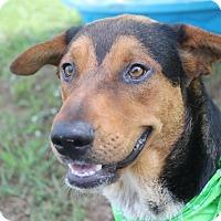 Adopt A Pet :: Stewart - Brattleboro, VT