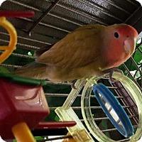 Adopt A Pet :: SKITTLES - DeLand, FL