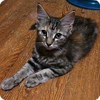 Adopt A Pet :: Mia - Harrisonburg, VA