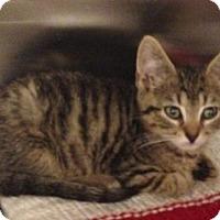 Adopt A Pet :: Douglas - Salem, MA
