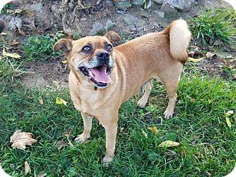 Pug Mix Dog for adoption in Westminster, Maryland - Jasmina