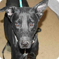 Adopt A Pet :: SHEILA - Bonita, CA
