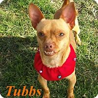 Adopt A Pet :: Tubbs - El Cajon, CA