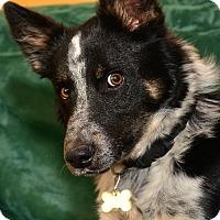 Adopt A Pet :: Fritz - Dillsburg, PA