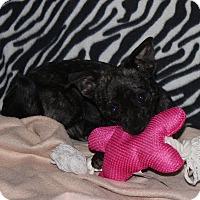 Adopt A Pet :: Chloe - Ridgecrest, CA