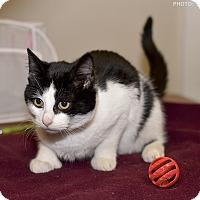Adopt A Pet :: Coley - Medina, OH
