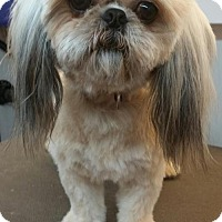 Adopt A Pet :: Dublin - Davie, FL