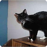 Adopt A Pet :: Diva - Hamburg, NY