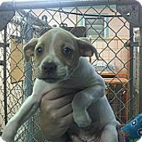 Adopt A Pet :: Prince Charming - Niceville, FL