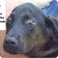 Adopt A Pet :: Flipper - FOUND BY OWNER! - Zanesville, OH
