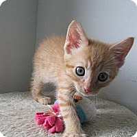 Adopt A Pet :: Thomas - Vero Beach, FL