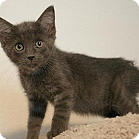 Adopt A Pet :: Willow - Sacramento, CA