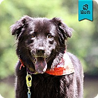 Adopt A Pet :: Ellie - Temple, GA