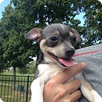 Adopt A Pet :: Malcolm - Homewood, AL