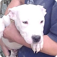 Adopt A Pet :: Luke - Medora, IN