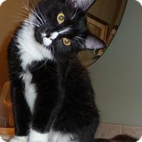Adopt A Pet :: Cooper 3 - Plainville, MA