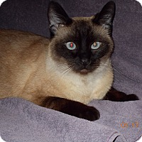 Adopt A Pet :: Holly Wood - Fairborn, OH