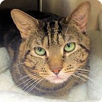 Adopt A Pet :: Charlie - Lunenburg, MA