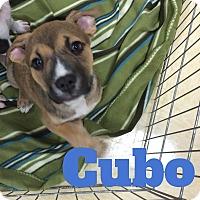 Adopt A Pet :: Cubo - Livermore, CA