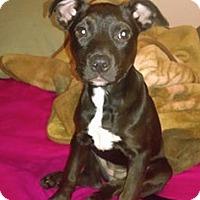 Adopt A Pet :: Elena - Gainesville, FL