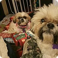 Adopt A Pet :: Tucker Turner - Urbana, OH