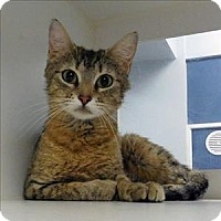 Adopt A Pet :: Cleo - Topeka, KS