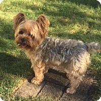 Adopt A Pet :: SGT. Pepper - N. Babylon, NY