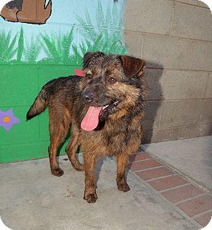 Terrier (Unknown Type, Medium) Mix Dog for adoption in Van Nuys, California - Wolfman Jack