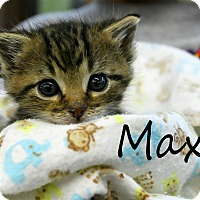 Adopt A Pet :: Max - Wichita Falls, TX