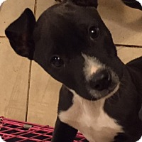 Adopt A Pet :: Crook - Adoption Pending - Spartanburg, SC