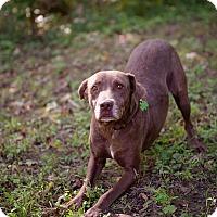 Adopt A Pet :: Chanel - Brattleboro, VT