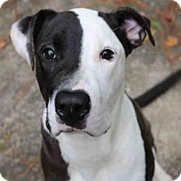 Adopt A Pet :: HARVEY DENT - Fort Walton Beach, FL