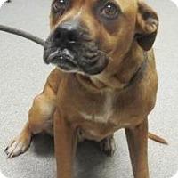 Adopt A Pet :: Agnes - Lincolnton, NC