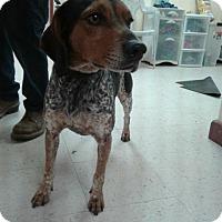 Adopt A Pet :: Tito - Fayetteville, WV