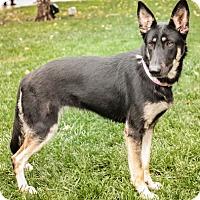 Adopt A Pet :: Dicara - Modesto, CA