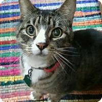 Adopt A Pet :: Jack (front de clawed) - Witter, AR